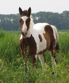 Stallion foal 2010 Eagles Qton Lucky Boy
